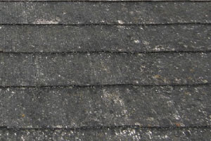 屋根の藻、苔